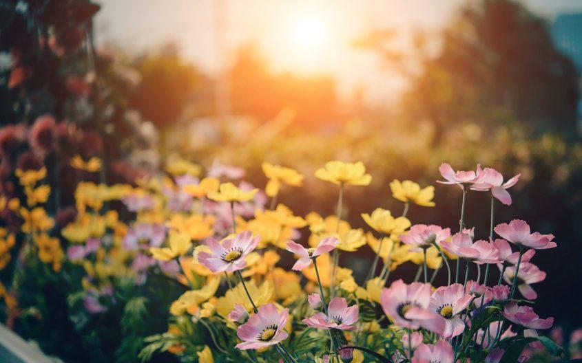 Je tuin een opknapbeurt geven